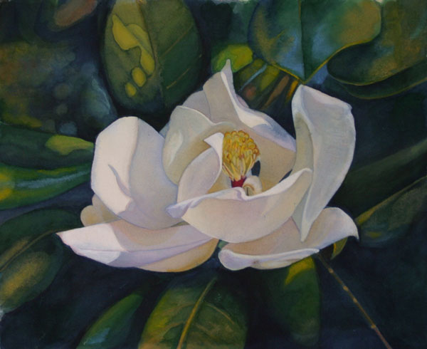 Betsy Arvelo Magnolia 1 Watercolor painting
