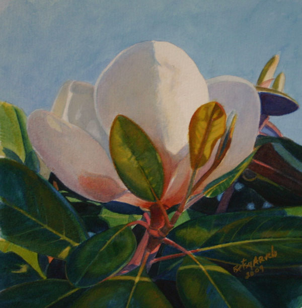 Betsy Arvelo Magnolia 6 Watercolor painting