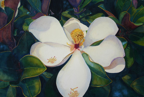 Betsy Arvelo Magnolia 2 Watercolor painting